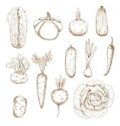 Healthy vegetables isolated sketches set vector image