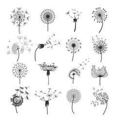 Dandelion blowball in the wind set vector