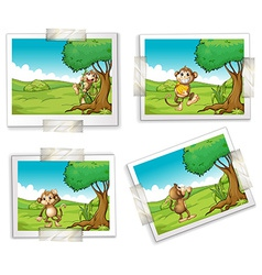 Photographs and monkeys vector image