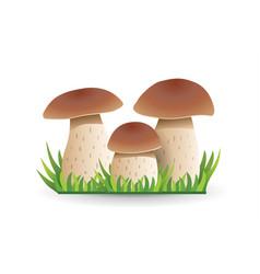 White mushroom vegetable healthy food mushrooms vector