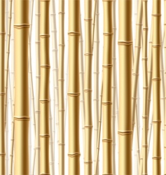 Bamboo forest background vector