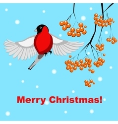 christmas card with bullfinch and rowan vector image