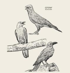 crow hand drawn high quality vector image