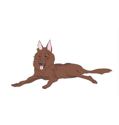dog lies vector image
