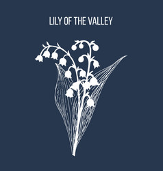 Lily valley convallaria majalis medicinal vector