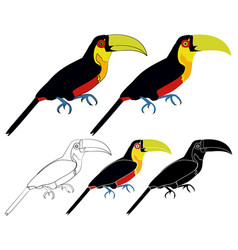 Red breasted toucan bird colored vector