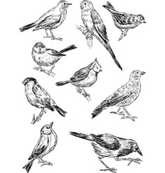 Sketches of the wild birds vector