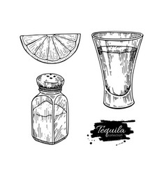 tequila shot glass with lime and salt shaker vector image