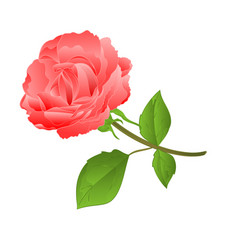 twig pink rose and bud vintage vector image