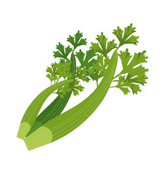Vegetable icon image vector