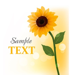 beautiful sunflower vector image vector image