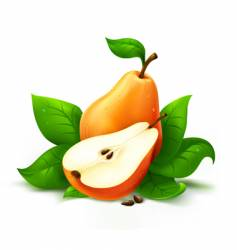 fresh pear with cut vector image vector image