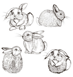 collection cute bunnies for design vector image