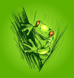 Colored hand sketch frogs vector
