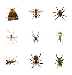 Realistic spinner locust arachnid and other vector