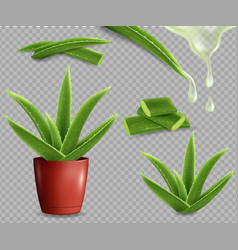 Aloe vera medicinal plant set isolated vector