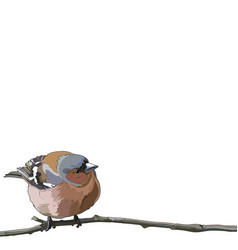 Card with bullfinch on a branch vector