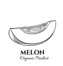 Hand drawn melon icon vector