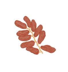 Sketch drawing twig with dates flat style date vector