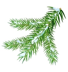 Snow lies on spruce branch vector image vector image