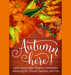 autumn here seasonal foliage and harvest poster vector image