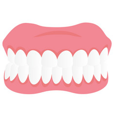 Dental jaw model cartoon vector