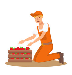 farmer with box of strawberries flat vector image