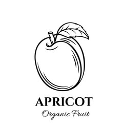 hand drawn apricot icon vector image