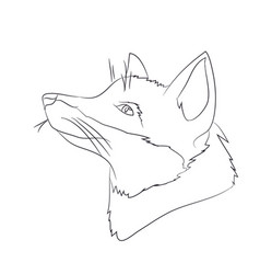 portrait of a fox lines vector image