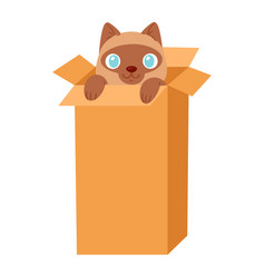 cat in box kitty pet character domestic vector image