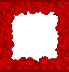 dianthus caryophyllus - red carnation flower vector image