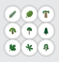 Flat icon bio set of baobab tree forest and vector