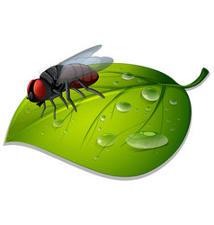 Fly on green leaf on white background vector