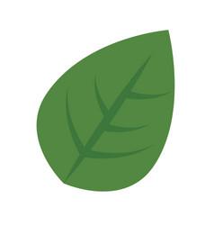 Green leaves design vector