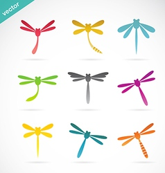 group colorful dragonfly vector image