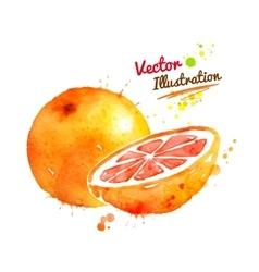 Watercolor grapefruit vector image