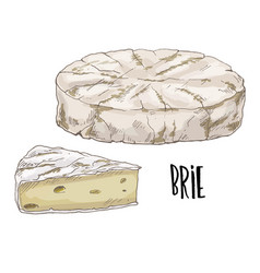 brie full color cheese vector image