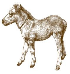Engraving antique pony foal vector