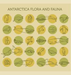Flat antarctica flora and fauna elements animals vector