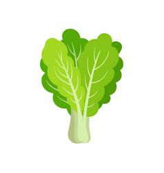 flat icon of fresh collard leafy green vector image