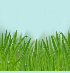 grass in droplets water seamless border vector image