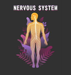 Human nervous system educational scheme vector