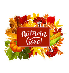Autumn here poster fall harvest in leaves vector
