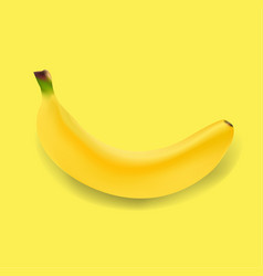 banner with fruit banana vector image