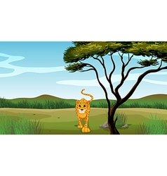 cartoon leopard vector image vector image