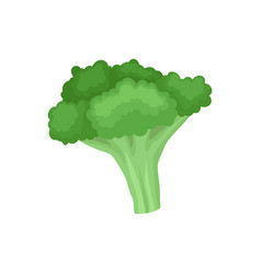 flat icon of fresh broccoli organic food vector image