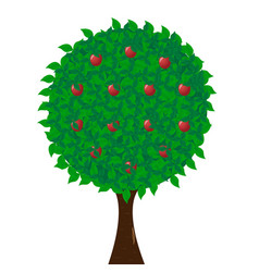 green apple tree full of red apples isolated on vector image