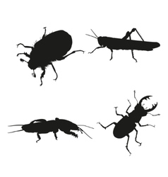 Insects on a white background vector image