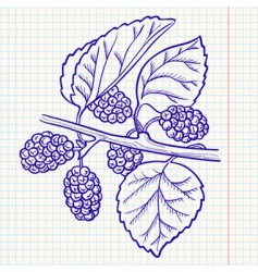 mulberry vector image