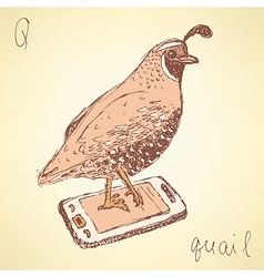 Sketch fancy quail in vintage style vector image